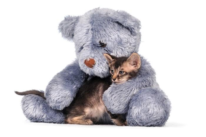 大きな熊のぬいぐるみと子猫