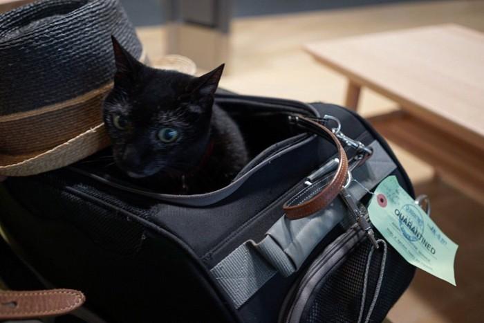 バッグの中のノロ