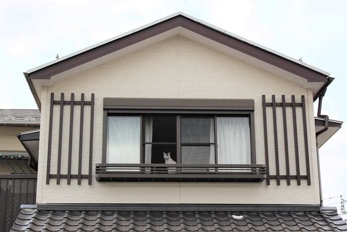 家の二階の窓から外を眺める猫