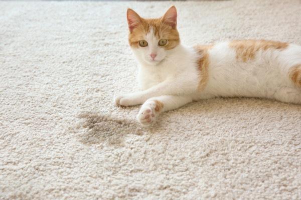 濡れた絨毯と猫