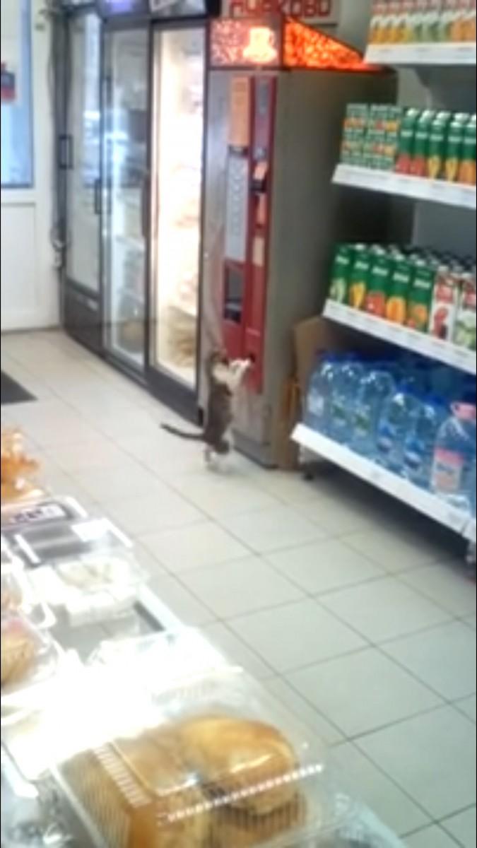 返却口に手を突っ込む猫