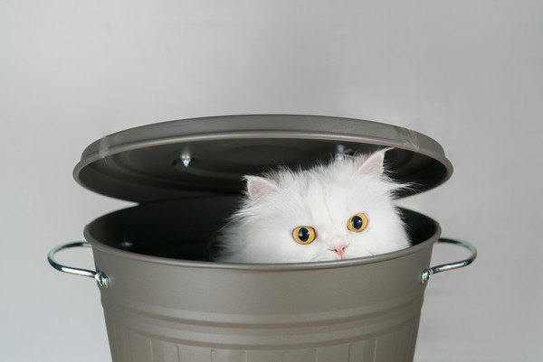 バケツに隠れる猫