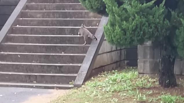階段を上る母猫