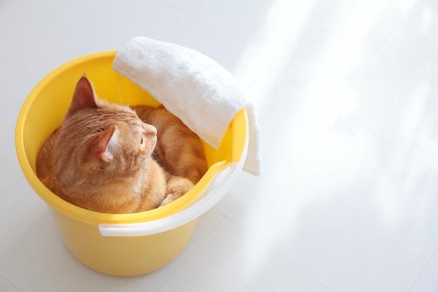 ゴミ箱に入っている猫