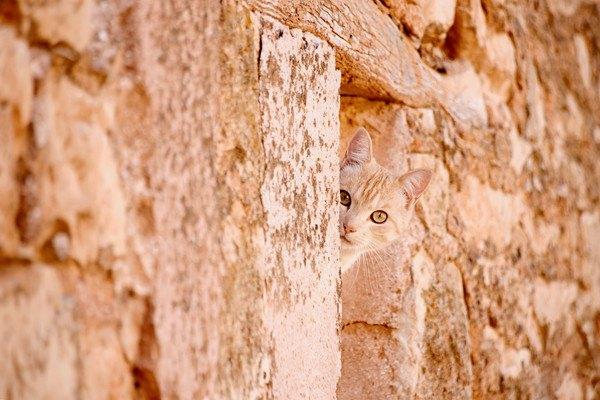 岩壁から覗く猫