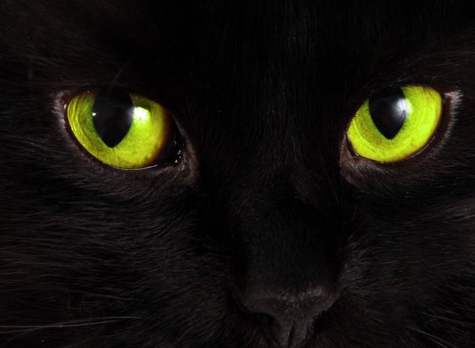 黒猫の目元