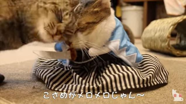額を寄せ合う2匹の猫