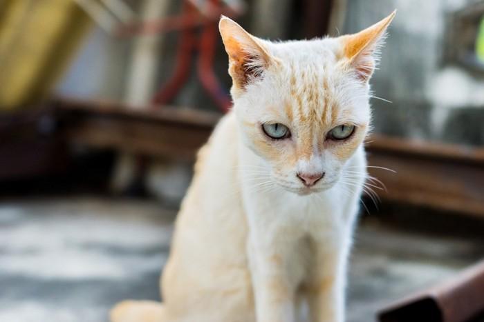 しょんぼり猫15