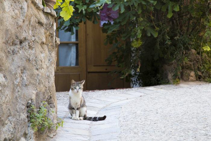 欧州路地裏の猫