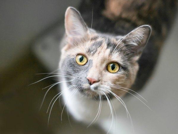 見上げて見つめる猫