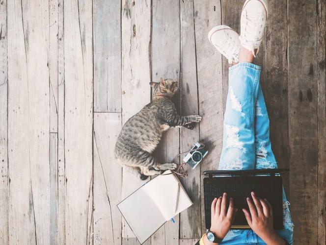 ネットショッピングしている猫