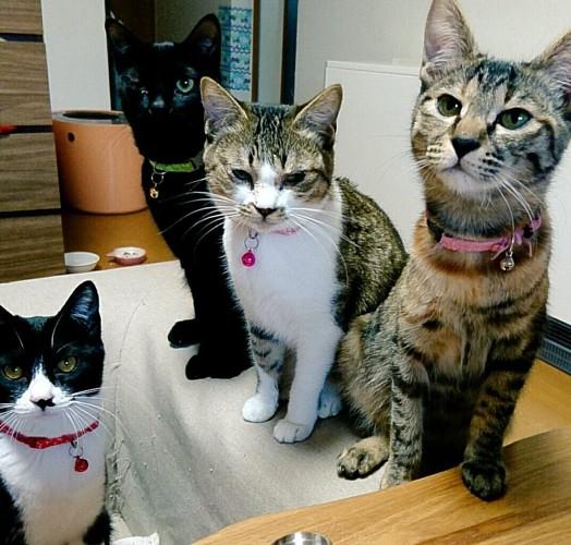 4匹の猫ちゃん