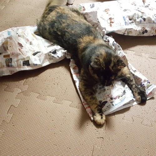 トンネルに覆いかぶさる猫