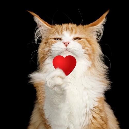 ハートを示す猫