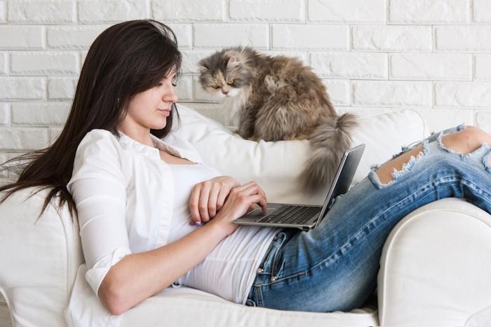 パソコンを見る女性と猫