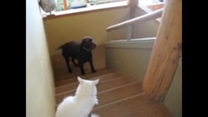 前に進めない犬