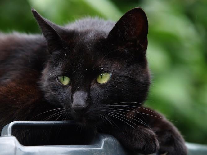 元気のない黒猫