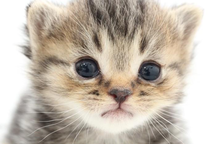 あどけない子猫の顔アップ