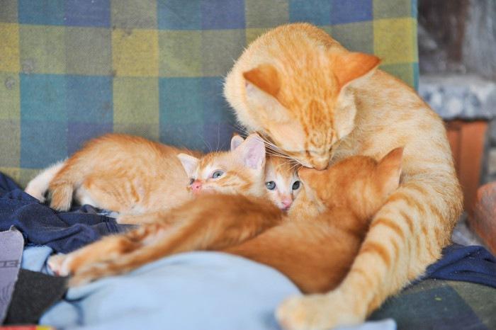 茶色の母猫と子猫