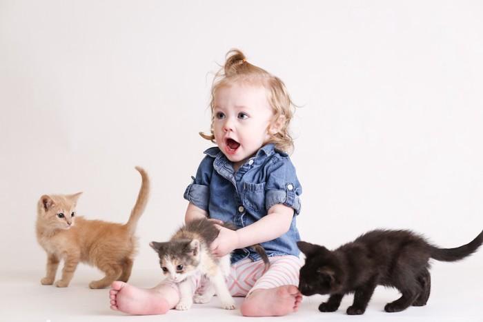 子猫たちと遊ぶ女の子