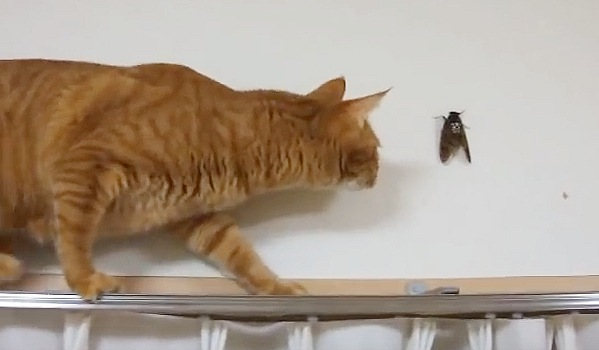 壁に張りつく蝉を発見
