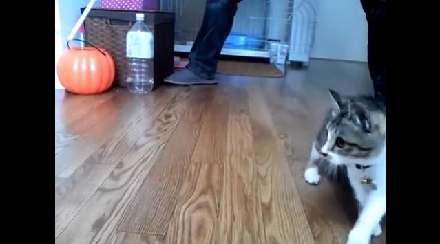 前脚を交差させる猫