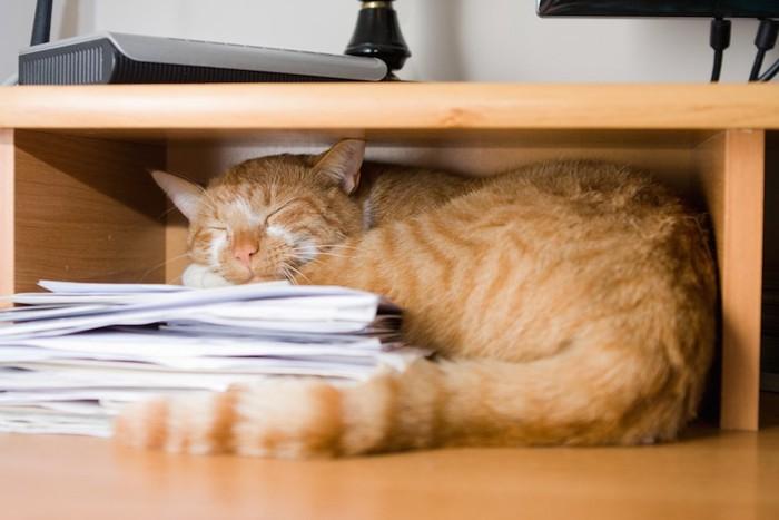 書類の上で眠る茶トラ猫