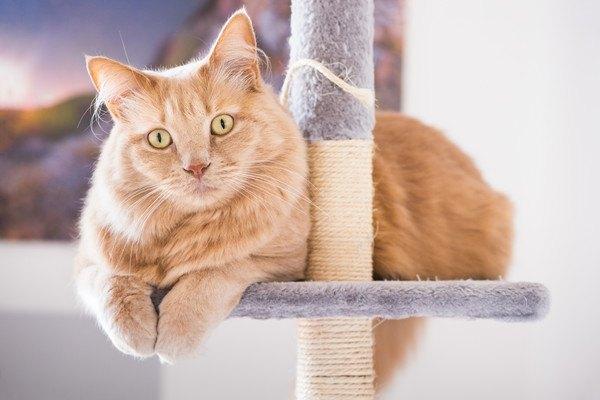 爪とぎのポールの台に乗ってこちらを見ている猫