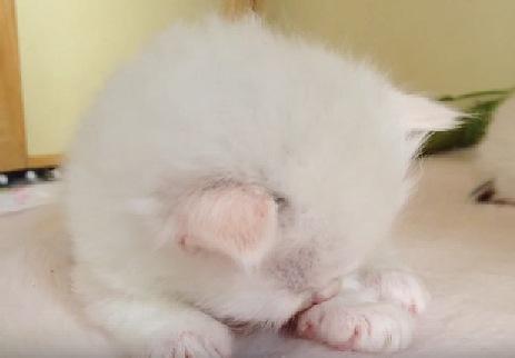 でも眠い子猫