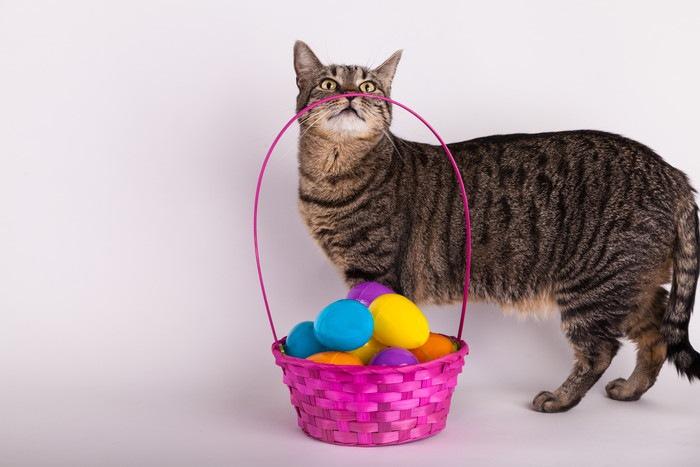 カラフルな色のボールと猫