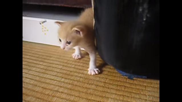 物陰から出てきた子猫