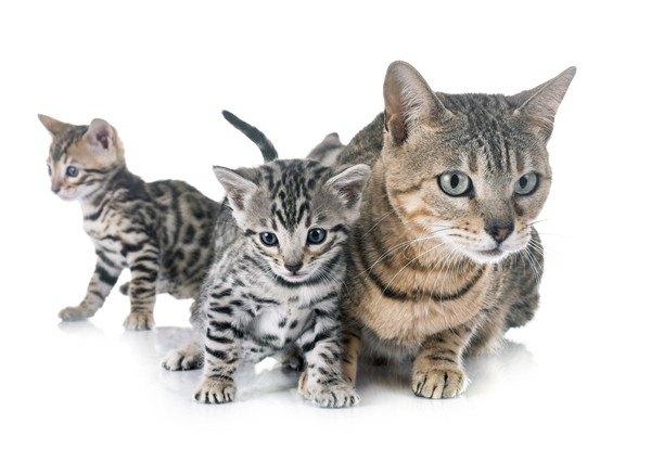 猫の色違い親子3匹