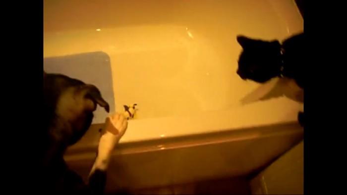 おもちゃをみる犬と猫