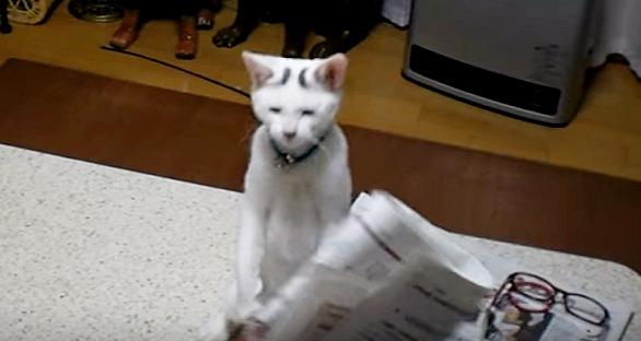 気を抜いて面白い表情をする猫
