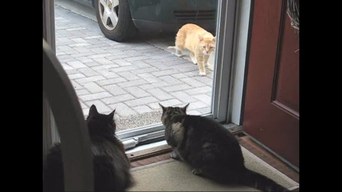外猫がみる