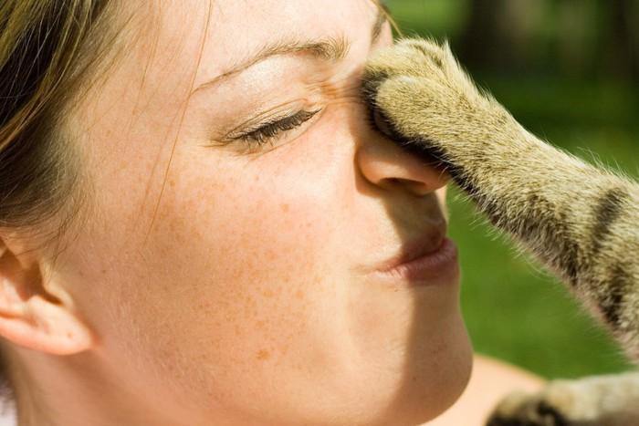 人間の鼻を触る猫の前足