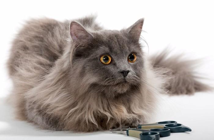 爪切りとペルシャ猫