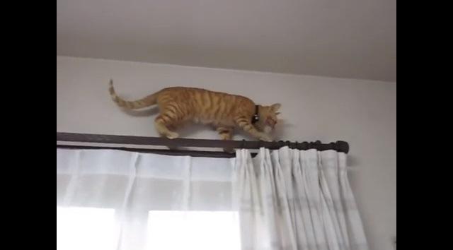 レールの端まで来た猫