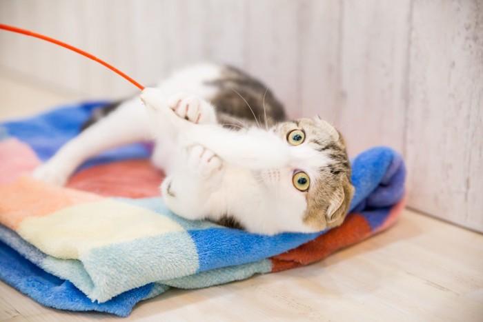 キャッチミーイフユーキャンで遊んでいる猫