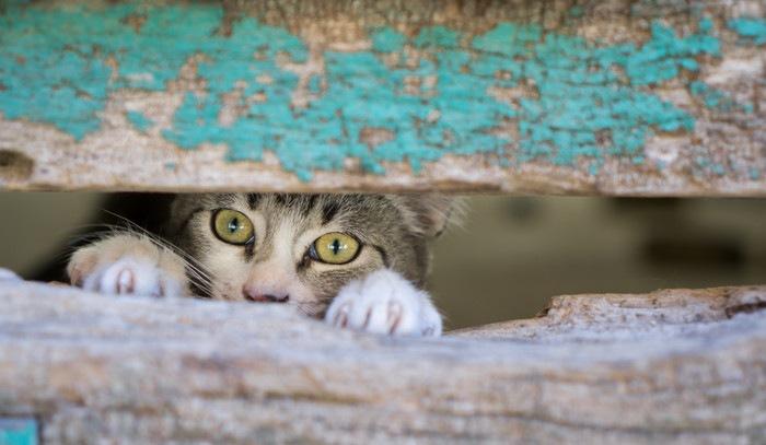 隙間からのぞく猫