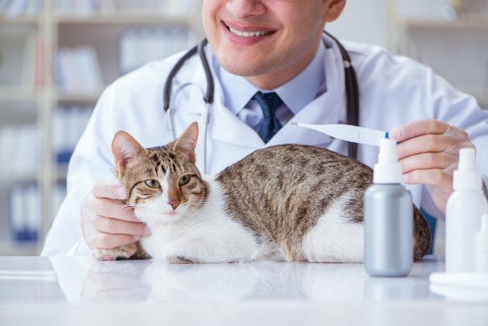 病院でチェックを受ける猫
