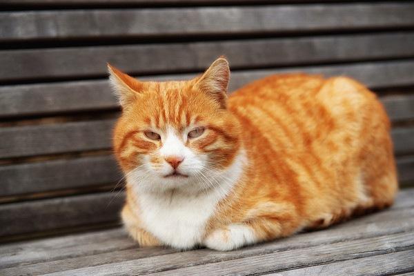 ベンチにいる茶色のきじ猫