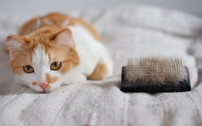 抜け毛のついたブラシの横でくつろぐ猫