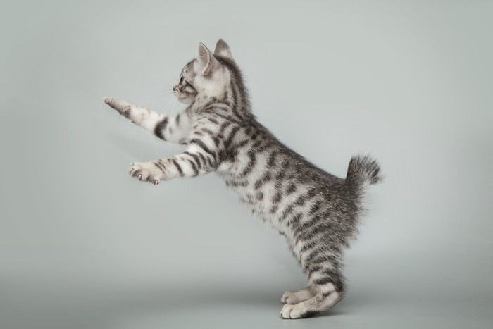 飛びかかる子猫