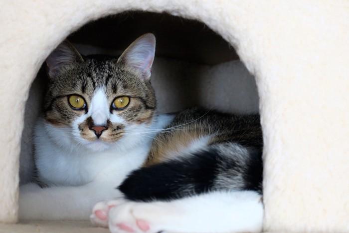 猫ハウスに入ってこちらを見る猫