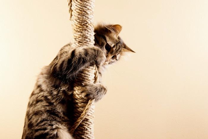 縄にしがみつく猫