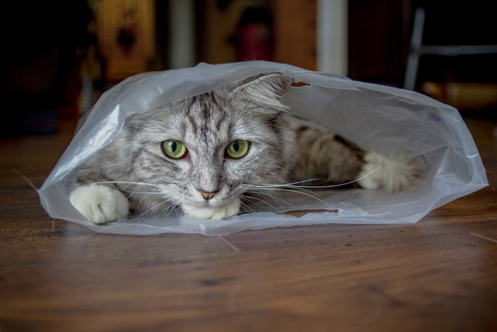 ビニールに入っている猫