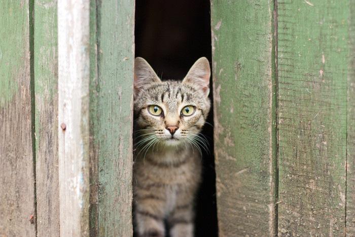 隙間からこちらを覗く猫