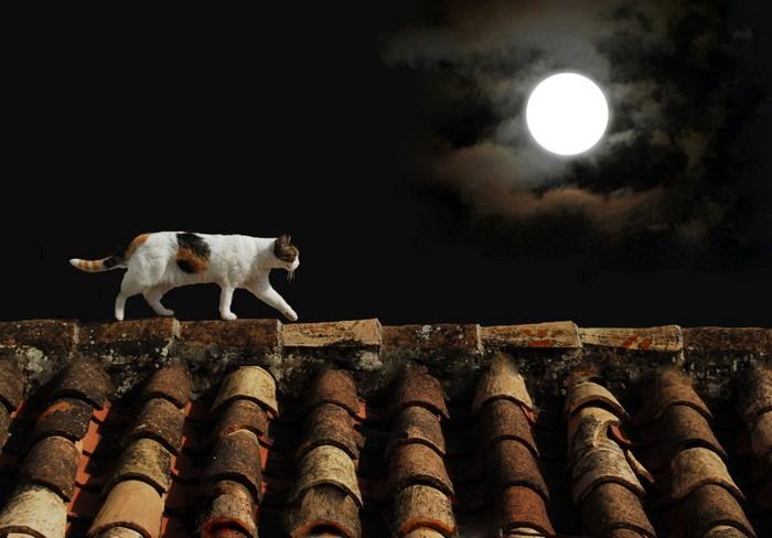 月夜に歩いている猫