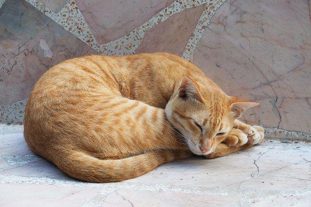 大理石の上で昼寝をしている猫